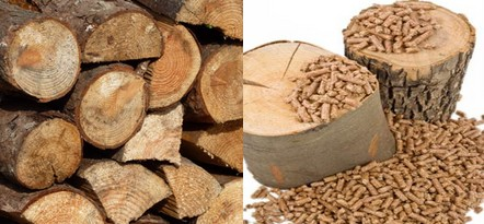 Raw material and wood pellet